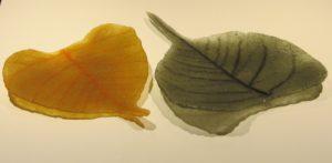 Pate de verre bohdi bladeren