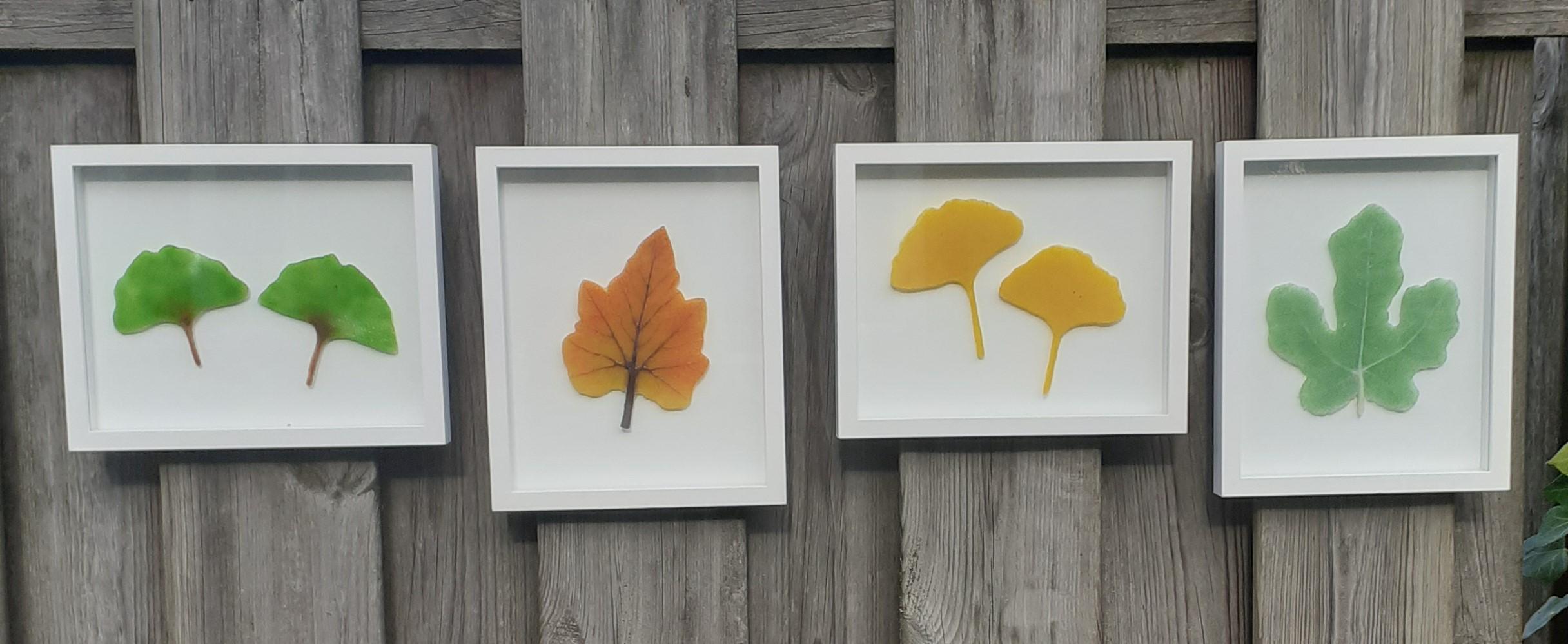 Ginkgo's  - herfstblad - ginkgo's - vijgenblad