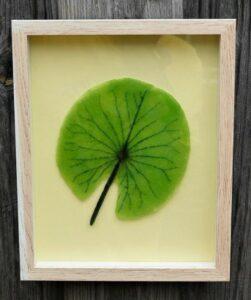 Lotusblad (foto: Joop Savelberg)